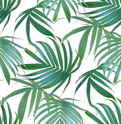 Vector palm frond Canvas Print