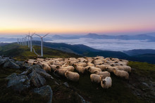 Sheep In Oiz Mountain Near Wind Turbines