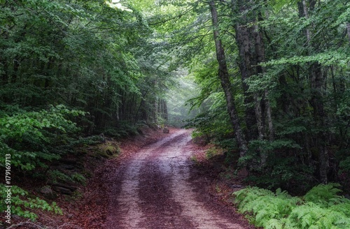 Foto auf Acrylglas Wald im Nebel wood