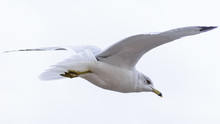 Seagull Flying Away With Sky I...