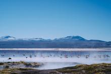 Flamingos In The Mist, Laguna ...