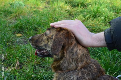 Foto  Der Inhaber streicht den Kopf eines Mischlingshunds im Profil auf einem Grashint