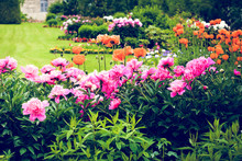 Beautiful Flowers In Summer Garden. Peonies, Poppies. Summertime Landscape, Park, Flowers And Trees View, Green Lawn, Grass. Famous Historical Place. For Posters, Interior,  Design, Nature Calendars.