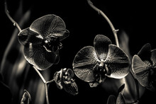 Close Up Of Orchids