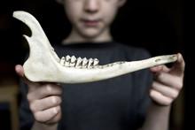 Boy Holding Deer Jaw Bone