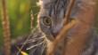 lop-eared cat outside outside in grass