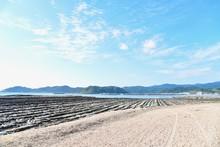 Scenery Around Aoshima Island In Miyazaki, Japan