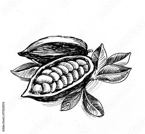 Fotografía  Cacao plant