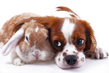Dog And Rabbit Together. Anima...