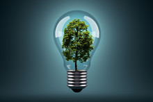 Ecology Concept. Green Tree Gr...