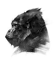 Sketch Head Of A Monkey Gorilla On A White Background