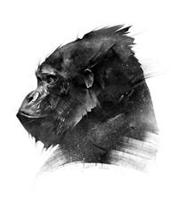 Fototapeta sketch head of a monkey gorilla on a white background
