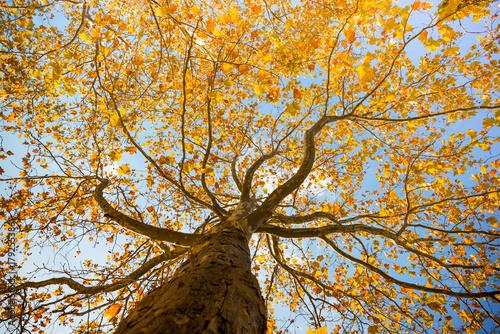 tlo-jesien-drzewa
