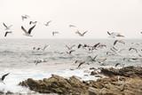 Gaviotas volando sobre rocas - 179257135