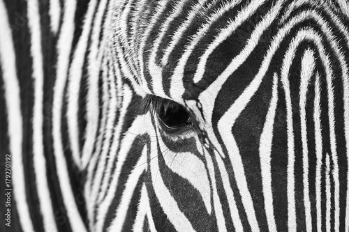 Close-up of the eye of a zebra with hair detail and patterns in black and white