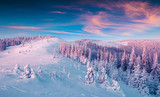 Magnificent winter sunrise in Carpathian mountains with snow covered fir trees