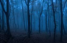 Dark Forest At Night
