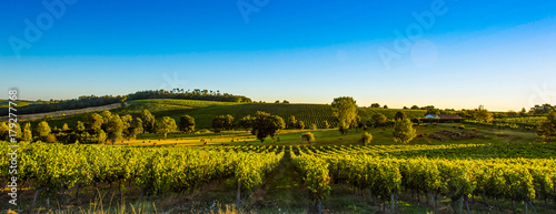 Photo sur Aluminium Vignoble Sunset landscape bordeaux wineyard france