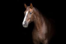 Red Horse Portrait On Black Ba...