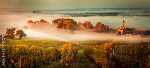 Sunset landscape bordeaux wineyard france