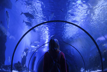 Caucasian Woman Admiring Fish In Aquarium