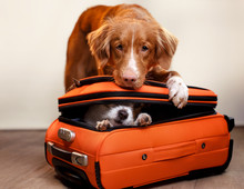 Two Dogs And A Suitcase
