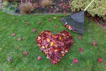 Fallen Leaves Raked Into Heart...