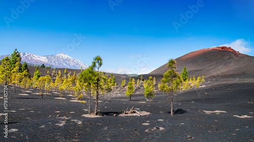 Tuinposter Canarische Eilanden View of the volcano Teide near Arenas Negras. Grandeur nature in Teide National Park, Tenerife, Canary Islands, Spain. Artistic picture. Beauty world.
