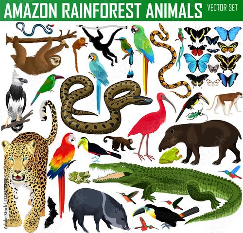 big set of vector amazon rainforest jungle animals Wallpaper Mural