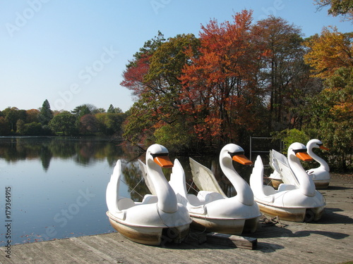 Swan Paddle Boats On The Dock At Belmont Lake State Park