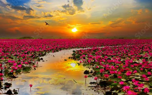 Fototapety, obrazy: nature
