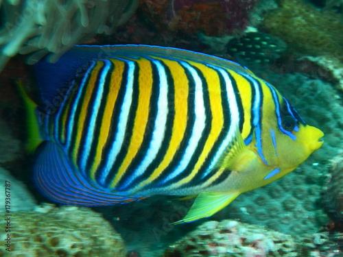 Fototapety, obrazy: underwater
