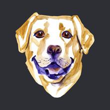 Watercolor Illustration Of Yellow Dog Breed Labrador Retriever.
