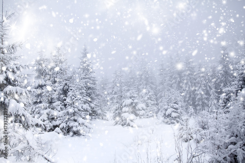 Fototapety, obrazy: Christmas background with snowy fir trees