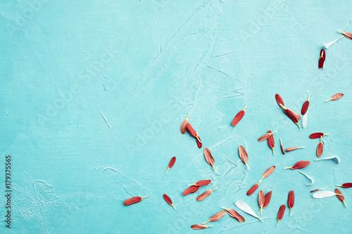 Carta da parati  Beautiful flower petals on the blue background