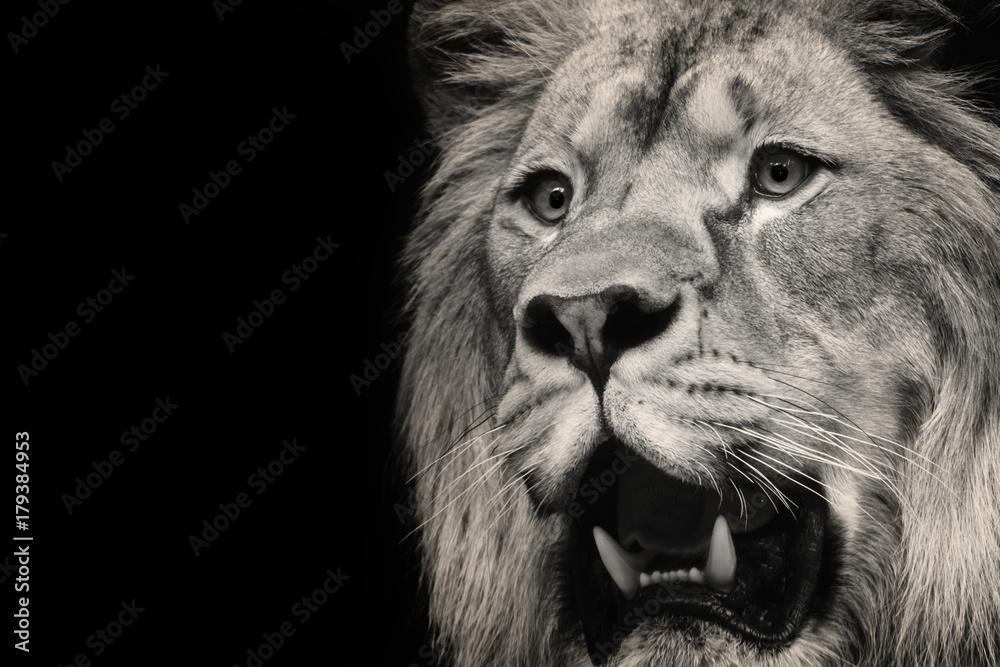 Fototapeta lion and teeth