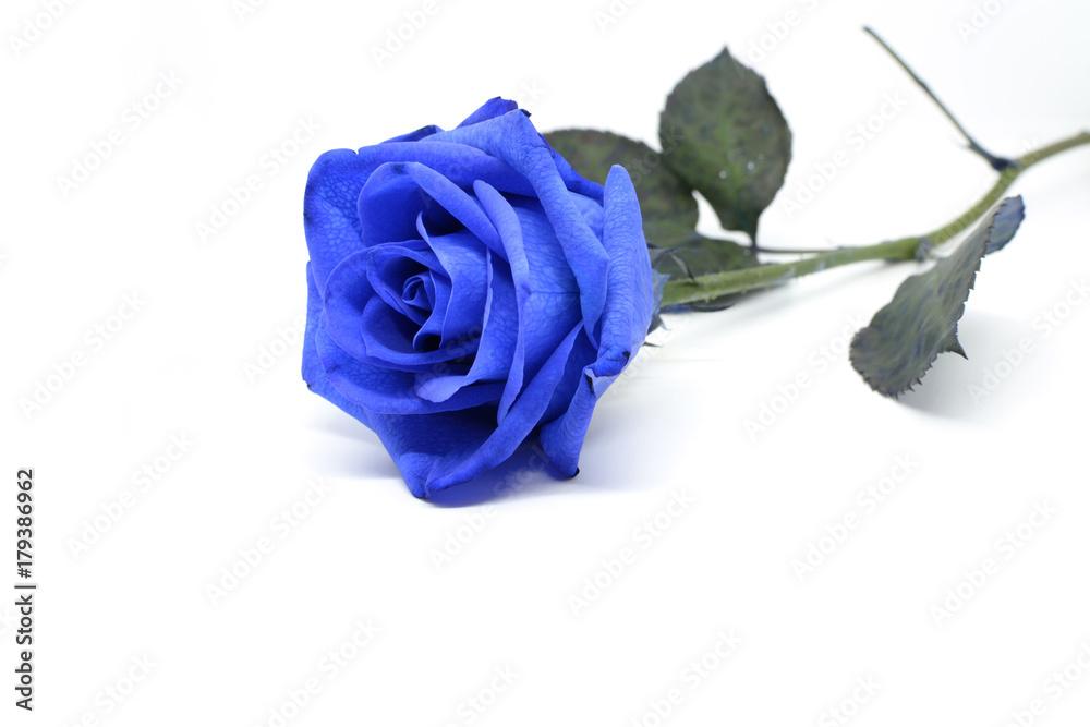 фотографія картини Fiore Di Una Rosa Blu Isolata Su Sfondo Bianco