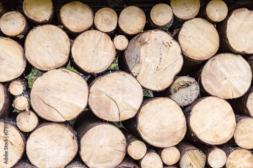 Türaufkleber Holz Baumstämme