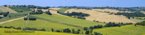 Summer landscape in Marches (Italy) near Belvedere Ostrense Wallpaper Mural