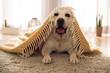 Cute dog at home