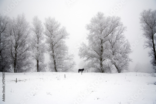 Canvas Prints Horses Lonley horse in winter landscape