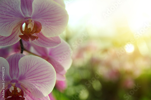 orchid-flower-in-garden