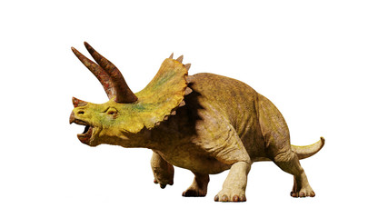 Triceratops horridus dinosaur from the Jurassic era