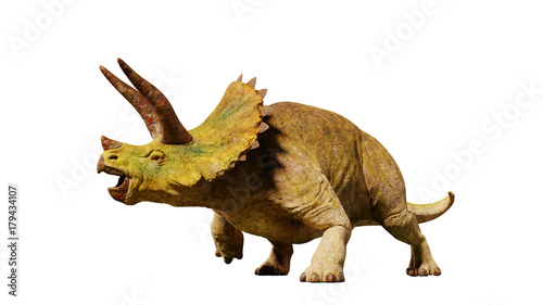 Triceratops horridus dinosaur from the Jurassic era Canvas Print