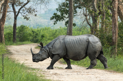 Spoed Foto op Canvas Neushoorn One-horned Rhinoceros, Kaziranga National Park, Assam, India