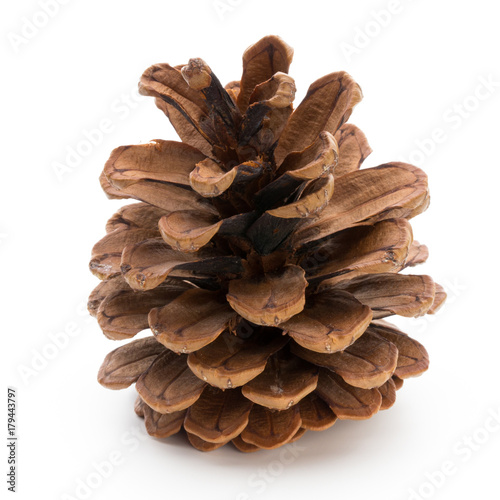 Fotografie, Obraz  Christmas decor,  pine cone on white background.