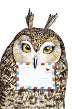 Cute Owl Portrait With Big Eye...