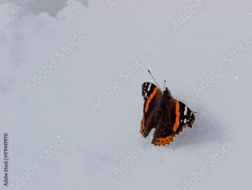 Plakat Widoki z góry Witosza, Bułgaria