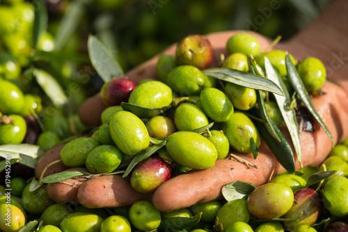 Olive verdi in mano