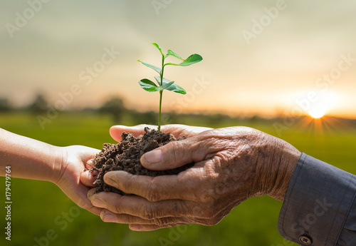 Keuken foto achterwand Planten Plant growing on soil with hand holding over sunlight ray and green background